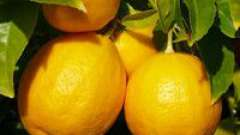 Царство ефірного масла лимона.