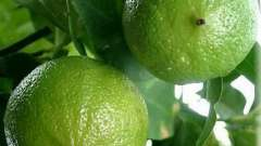 Ефірна олія бергамоту.